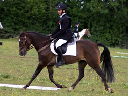 Ostara's Umberto Doing His Dressage!