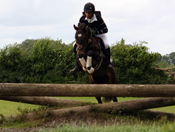 Ostara's Umberto On The Cross Country Course